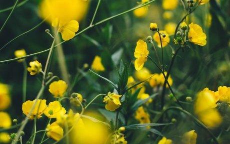 Nurturing the Natural Landscape