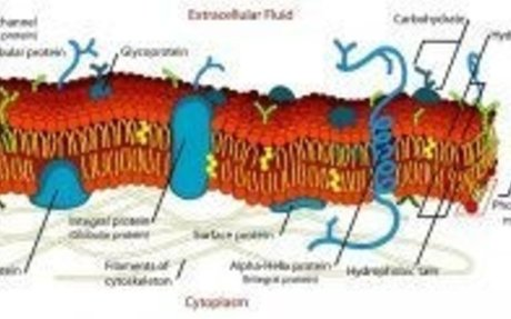 Cell Membrane - Definition, Function and Structure | Biology Dictionary