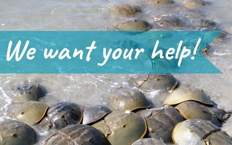 Reporting Form for Spawning Horseshoe Crabs