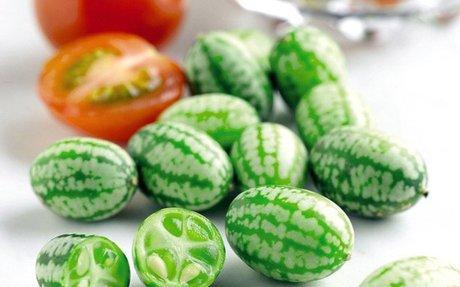 Ha különlegességre vágysz, nevelj mexikói egérdinnyét - Kertlap Kertészeti Magazin & Kerté