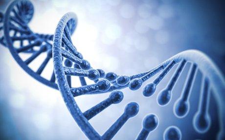 Human biology - Wikipedia