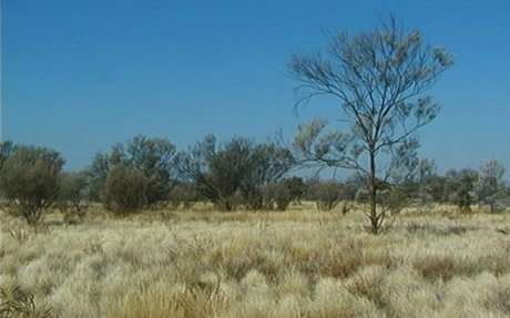 What is a grassland?