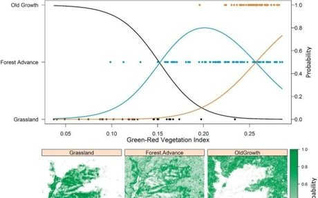 Quantifying structural diversity to better estimate change at mountain forest margins