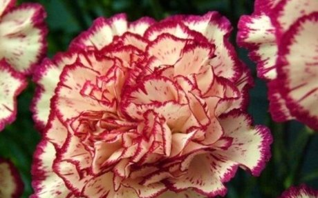 Find Local Florists In Australia
