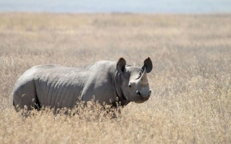 Top 10 - The World's Most Endangered Animals - OneKind