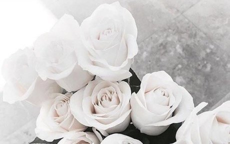 Photograph of White Roses