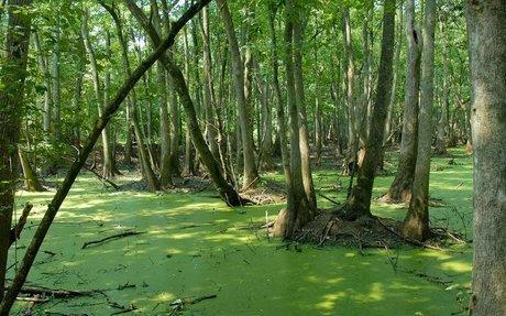 The Okefenokee Swamp