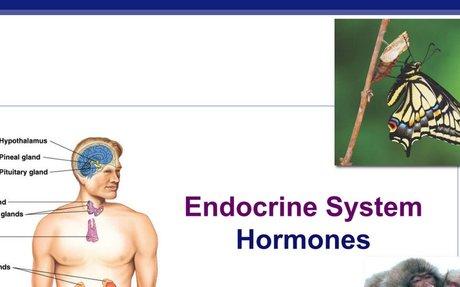 Endocrine_PPT_2018.pdf