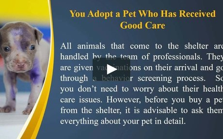 The Best 7 Reasons to Adopt Animals from the Shelter! by Stephanie Taunton