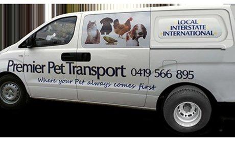 Domestic Pet Transport