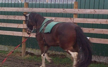 Horse Training: Why we don't use side reins on horses