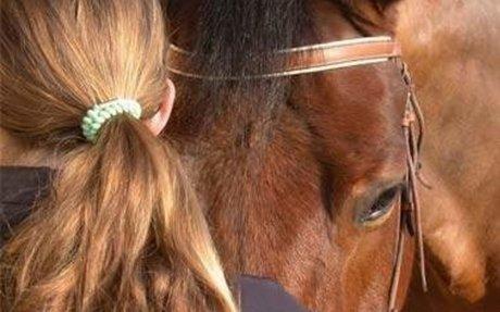 La médiation animale ou le triangle soignant, animal, patient