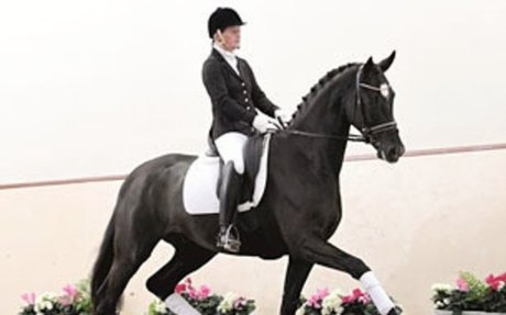 Dressage:  Don De Niro Euthanized After Freak Accident in Stall