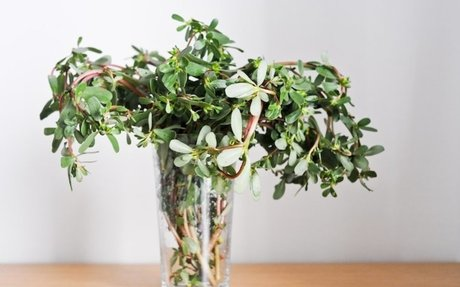 Purslane Recipes: 45 Things To Do With Fresh Purslane | Chocolate & Zucchini