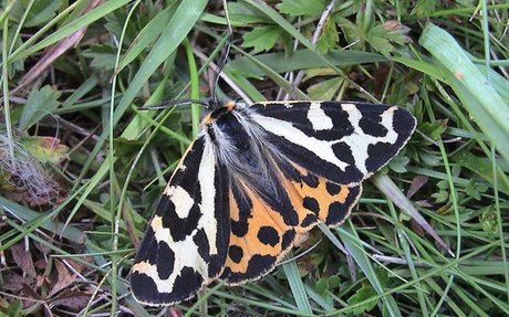 Moth Makes Different Chemical Weapons for Different Predators - Inkfish