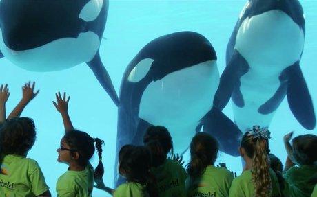 Here's The Story of SeaWorld | SeaWorld®