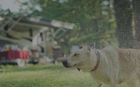 Traveling With Your Pets | Lazydays RV Lifestyle Blog