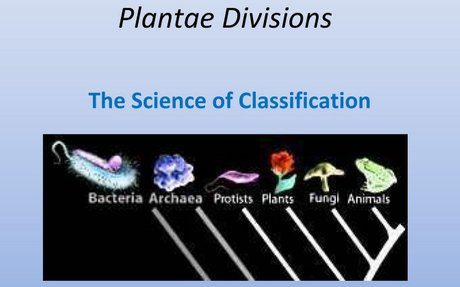 Taxonomy: phyla and divisions