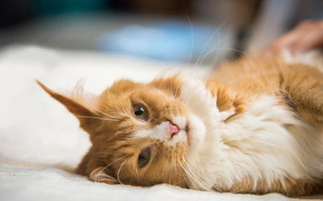 Top 10 Reasons Cats Are Awesome | PurrfectPost.com