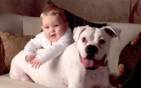 10 Reasons Boxers Might Be the Perfect Dog