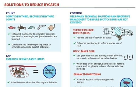 Solution 2: How to reduce the amount of bycatch