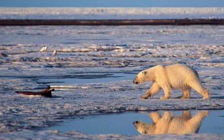 A little extra global warming will mean a lot more habitat loss for plants and animals, st