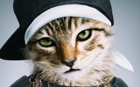 Cicák és a pénz / Cashcats