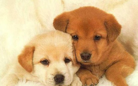 cute puppies - Google Search
