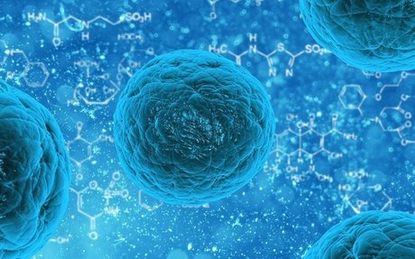 Study Finds Human Stem Cells May Help To Treat Patients