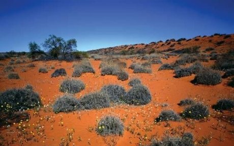 Simpson Desert | Animals, Plants, & Facts