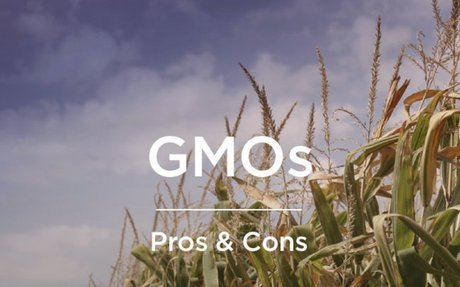 GMOs: Pros and Cons