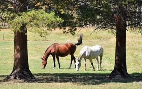 Horse Crime: More Horses Found Butchered in Florida