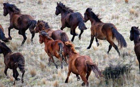 Horses – Te Ara Encyclopedia of New Zealand