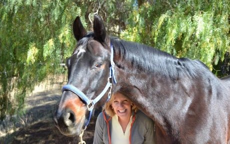 Horse Feed Contamination: Nutrena Investigates Ionophore Tainted Horse Feed