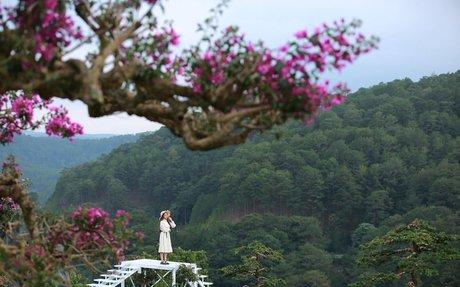 Tour du lịch Đà Lạt nghỉ dưỡng 3N2D - Khuyến mãi cho người trên 50 tuổi - Mạng bán tour...