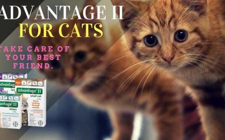 Advantage II for Cats - Best Flea Treatment For Cats - My Pet Tips