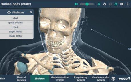 الجسم البشري ثلاثي الأبعاد VR