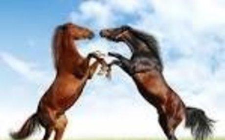 horses aka life & love