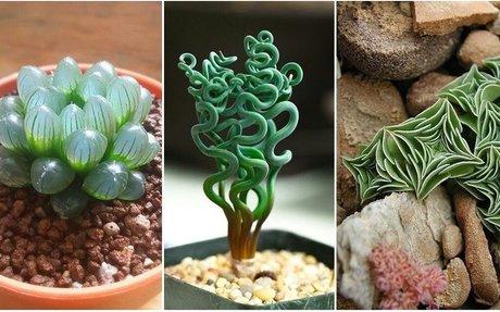 10 különös, de csodálatos szobanövény, amelyekről eddig azt sem tudtuk, hogy léteznek