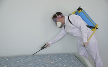 Prompt Bed Bug Inspection in Arlington Heights IL