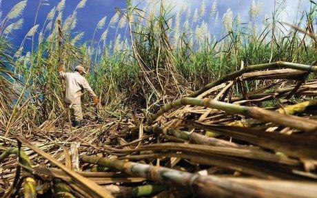 Masterplan sweetens sugar industry outlook