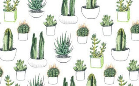 Cactus Succulent Shower Curtain Collection