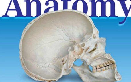 color-atlas-of-anatomy-a-photog-study-of-the-human-body-7th-ed-j-rohen-et-al-lippincott-20