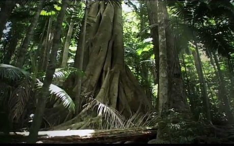 Rainforest Beneath the Canopy - YouTube