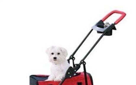 Stroller for Your Maltese Dog