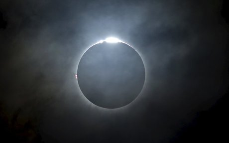 How the solar eclipse affects animal behavior