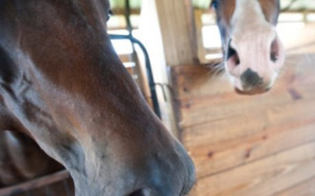 Horse Health: Arena Dust May Impact Lung Health of Horses