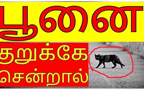 Black cat crossing bad omen || What are the changes in brain when you think negative