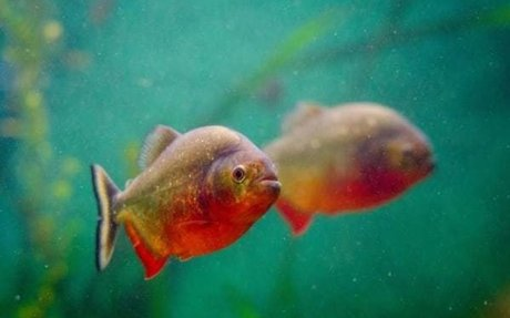 10 Easy Steps You Can Follow to Keep a Great Aquarium