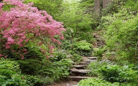 Garden in the Woods         —         New England Wild Flower Society